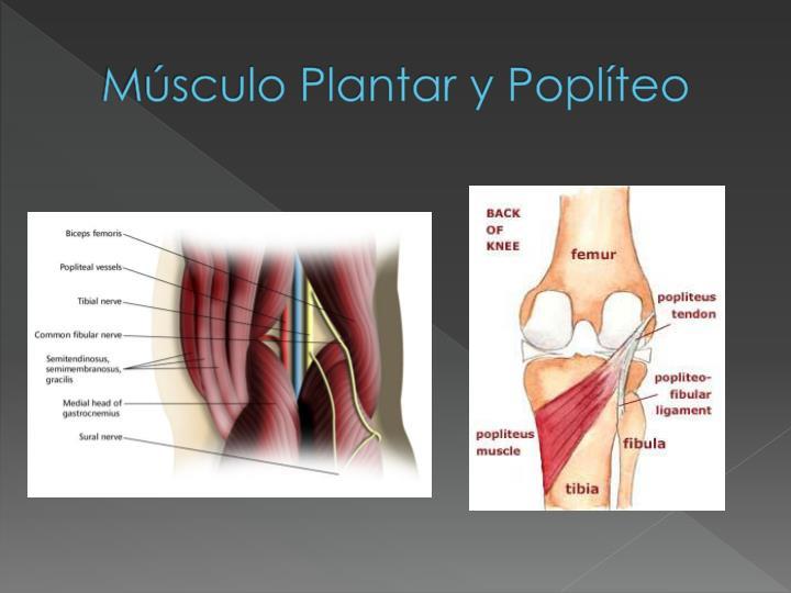 Músculo Plantar y Poplíteo