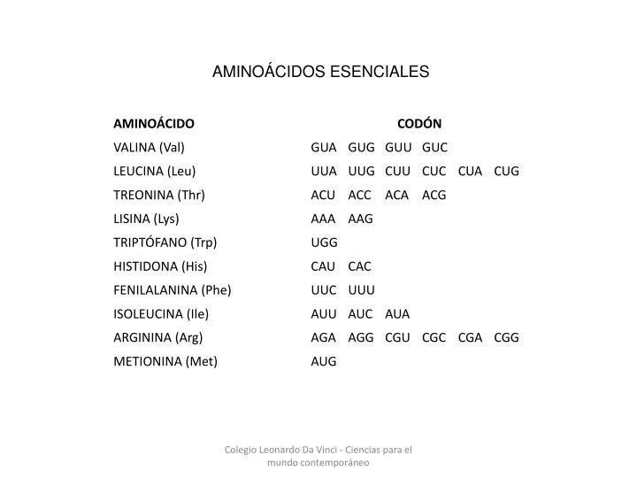 AMINOÁCIDOS ESENCIALES