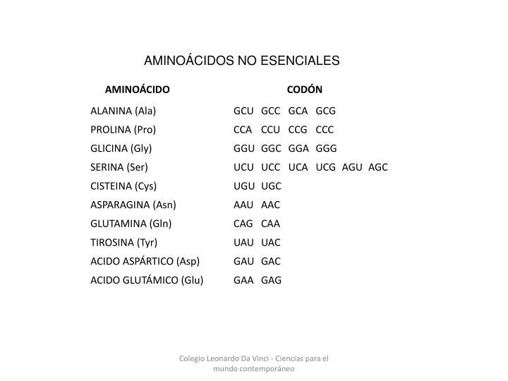 AMINOÁCIDOS NO ESENCIALES