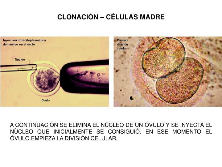 CLONACIÓN – CÉLULAS MADRE