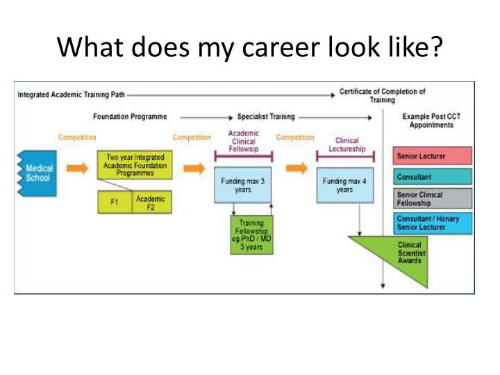 What does my career look like?