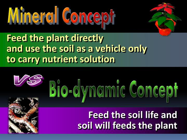 Feed the plant directly