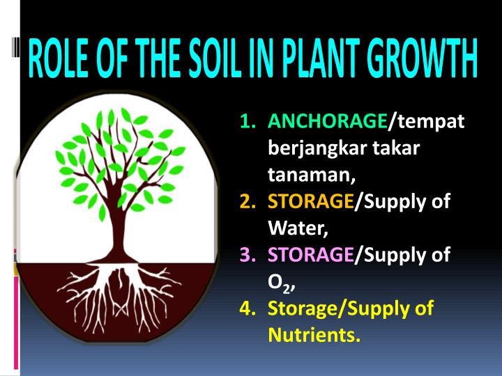 ROLE OF THE SOIL IN PLANT GROWTH