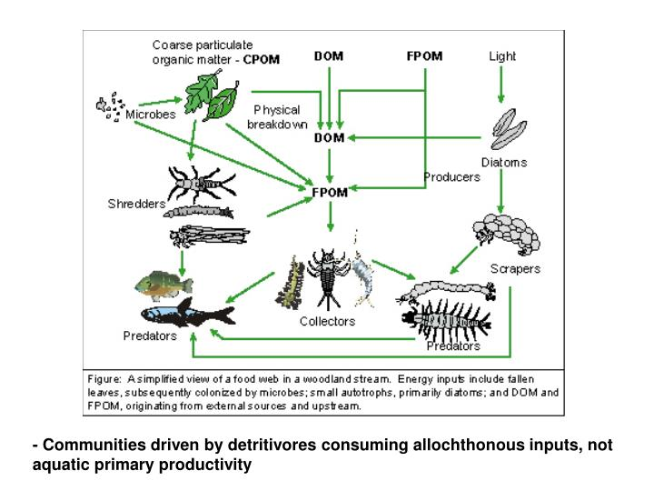 - Communities driven by detritivores consuming allochthonous inputs, not aquatic primary productivity