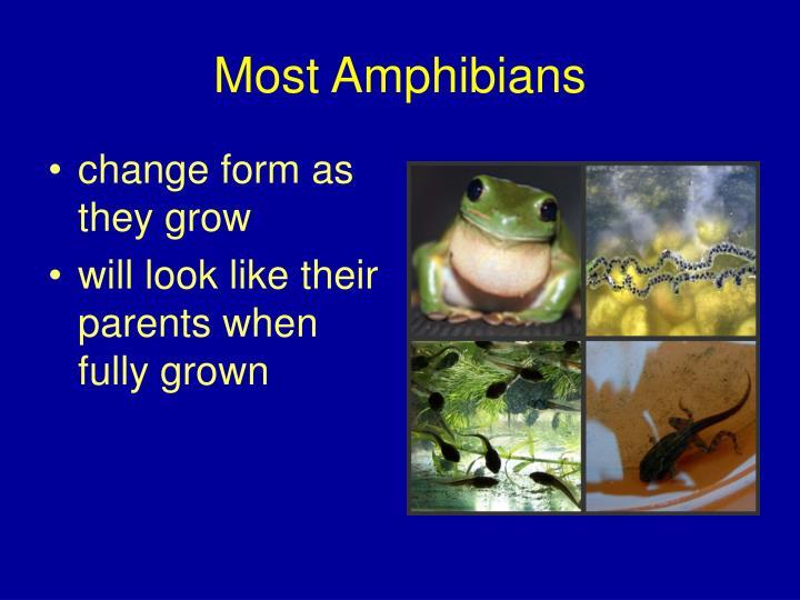 Most Amphibians