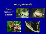 young animals1