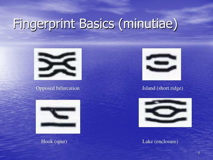 Fingerprint Basics (minutiae)