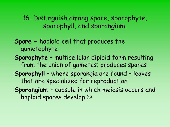 16. Distinguish among spore, sporophyte, sporophyll, and sporangium.