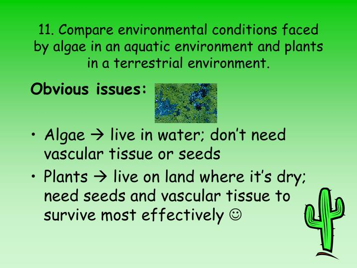 11. Compare environmental conditions faced by algae in an aquatic environment and plants in a terrestrial environment.