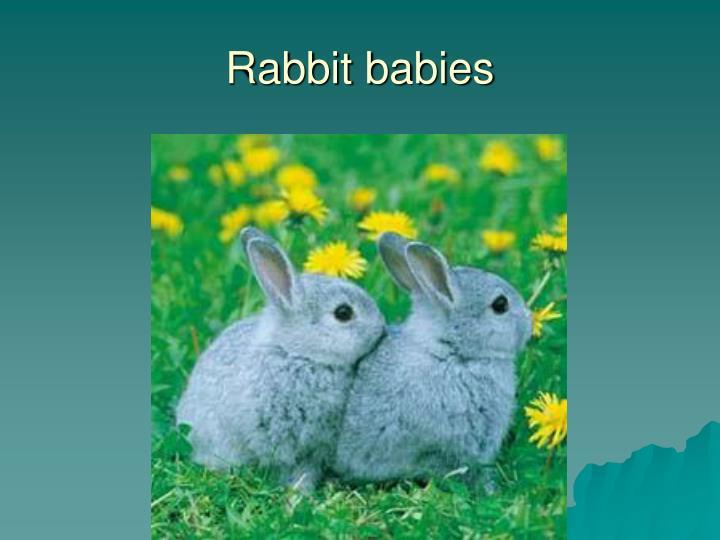 Rabbit babies