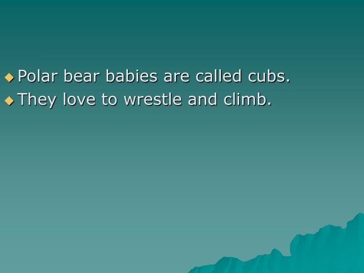 Polar bear babies are called cubs.