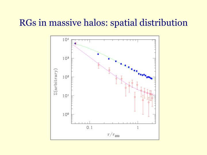 RGs in massive halos: spatial distribution