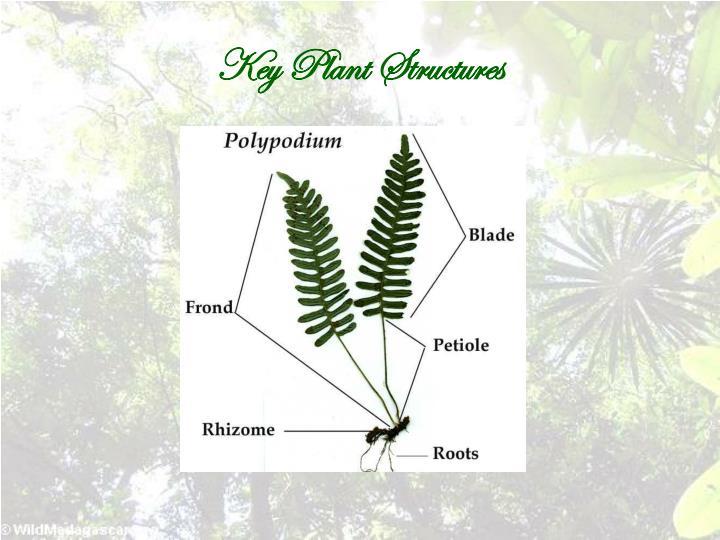 Key Plant Structures