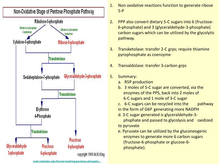 Non oxidative reactions function to generate ribose 5-P