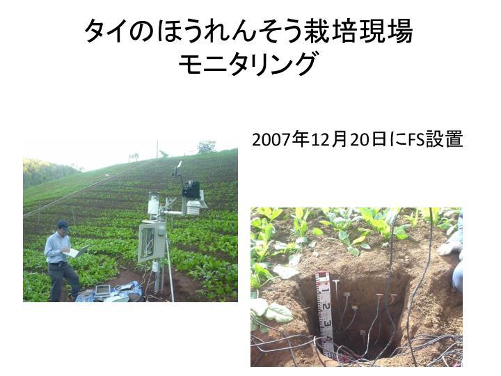 タイのほうれんそう栽培現場