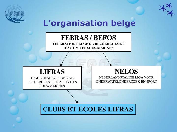 L'organisation belge