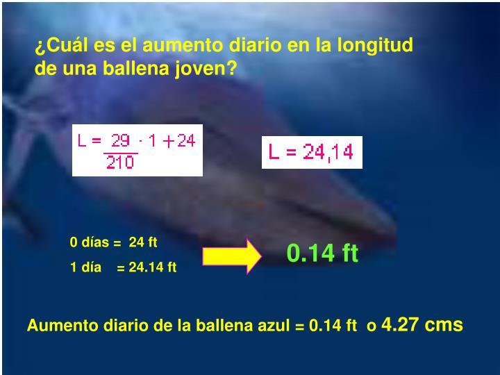 ¿Cuál es el aumento diario en la longitud de una ballena joven?