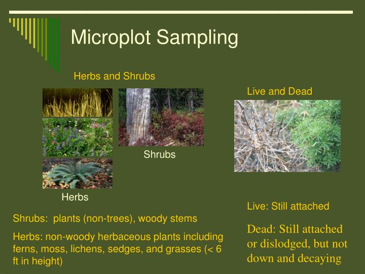 Microplot Sampling