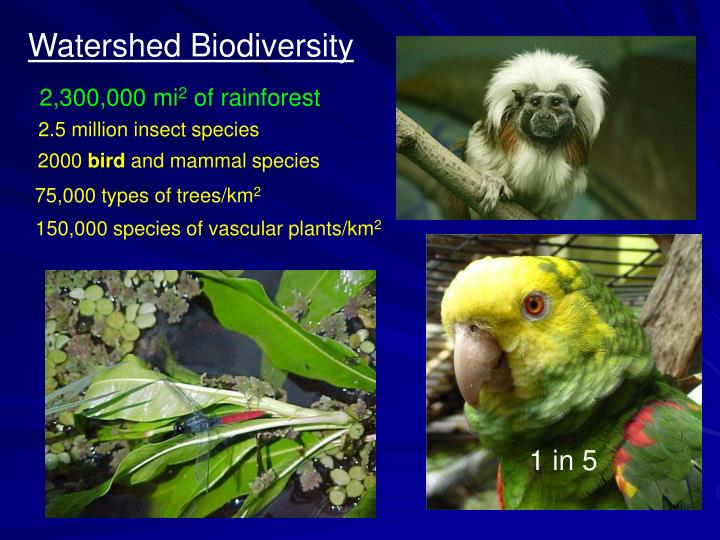 Watershed Biodiversity