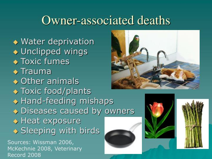 Owner-associated deaths
