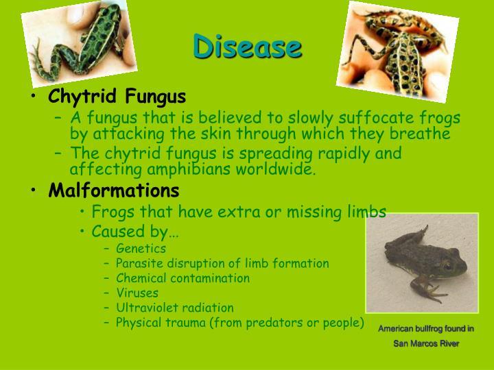 Disease
