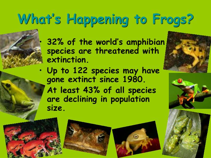 What's Happening to Frogs?