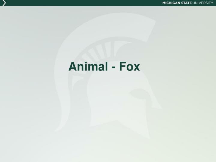 Animal - Fox