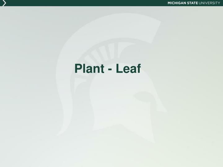 Plant - Leaf