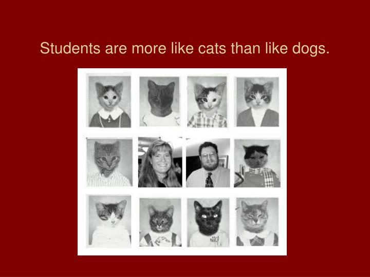 Students are more like cats than like dogs.
