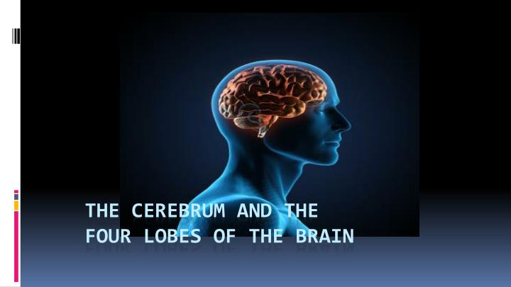 The Cerebrum and the