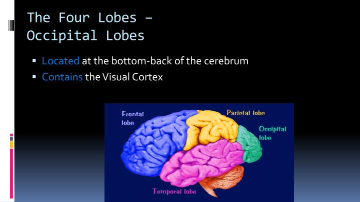 The Four Lobes –