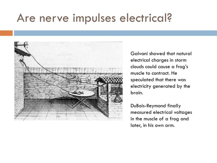 Are nerve impulses electrical?