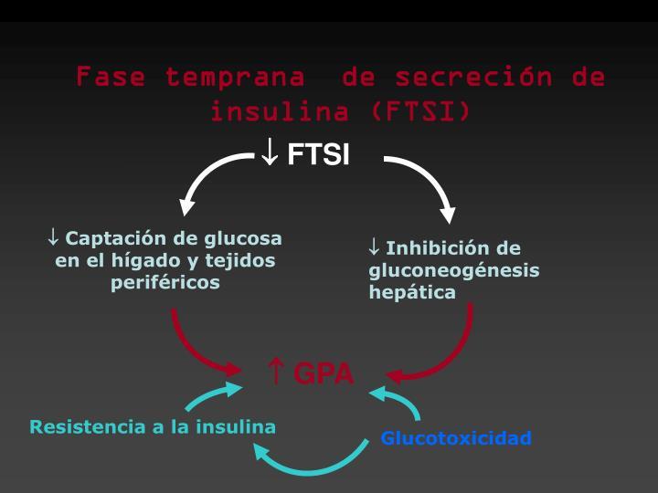 Fase temprana  de secreción de insulina (FTSI)
