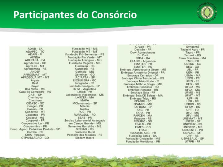 Participantes do Consórcio