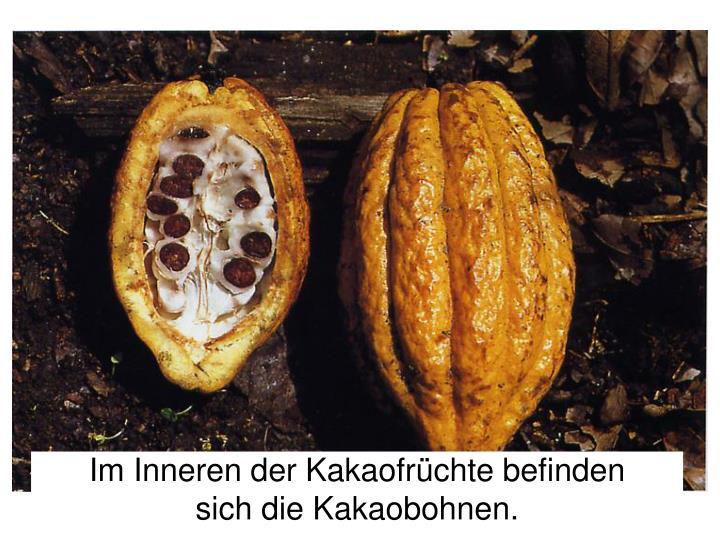 Im Inneren der Kakaofrüchte befinden
