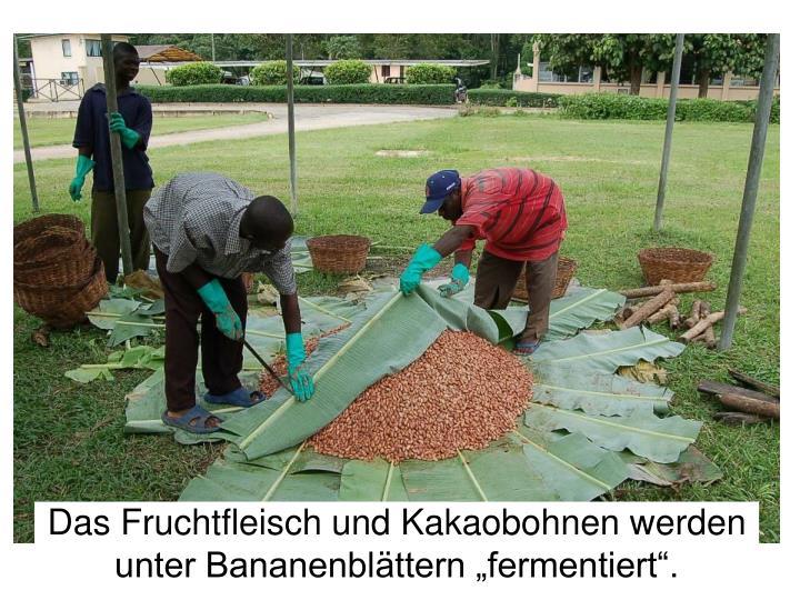 """Das Fruchtfleisch und Kakaobohnen werden unter Bananenblättern """"fermentiert""""."""