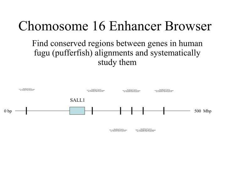 Chomosome 16 Enhancer Browser