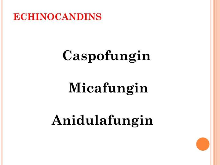Echinocandins