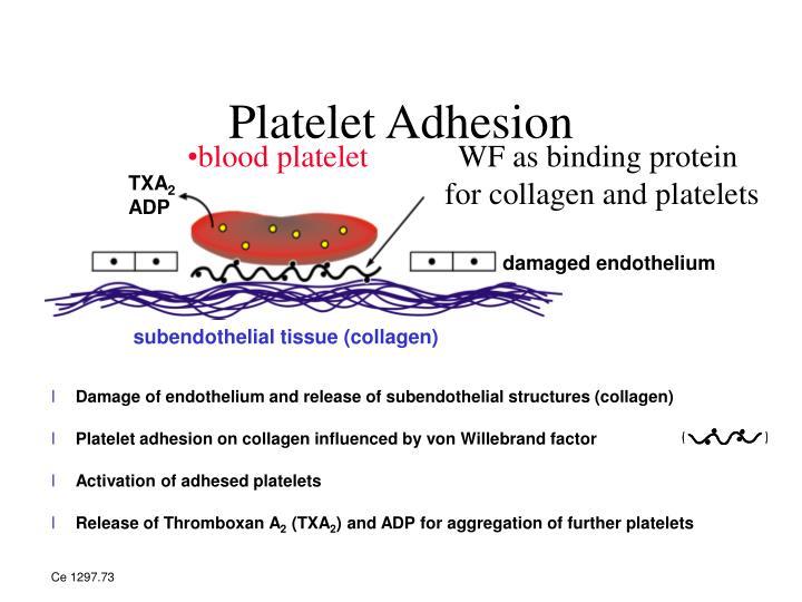 Platelet Adhesion