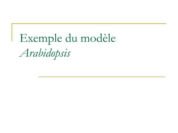 Exemple du modèle