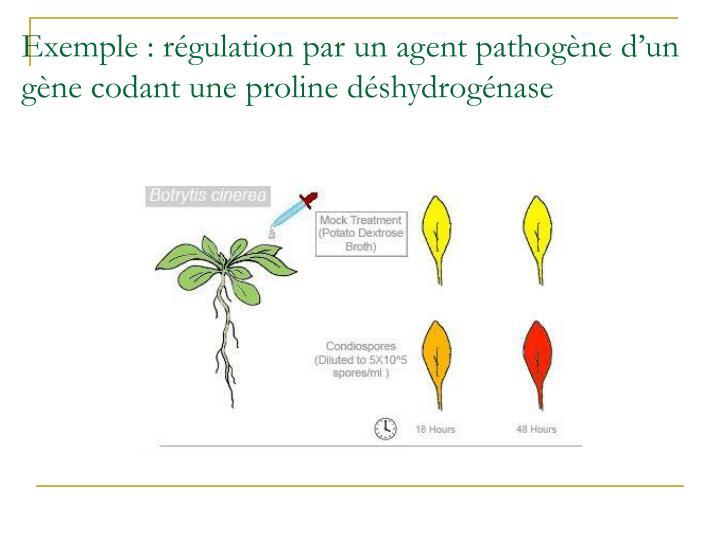 Exemple : régulation par un agent pathogène d'un gène codant une proline déshydrogénase