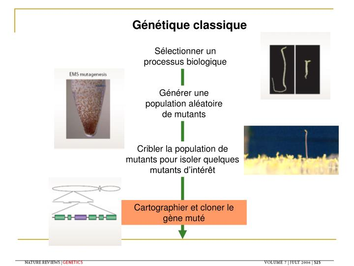 Génétique classique