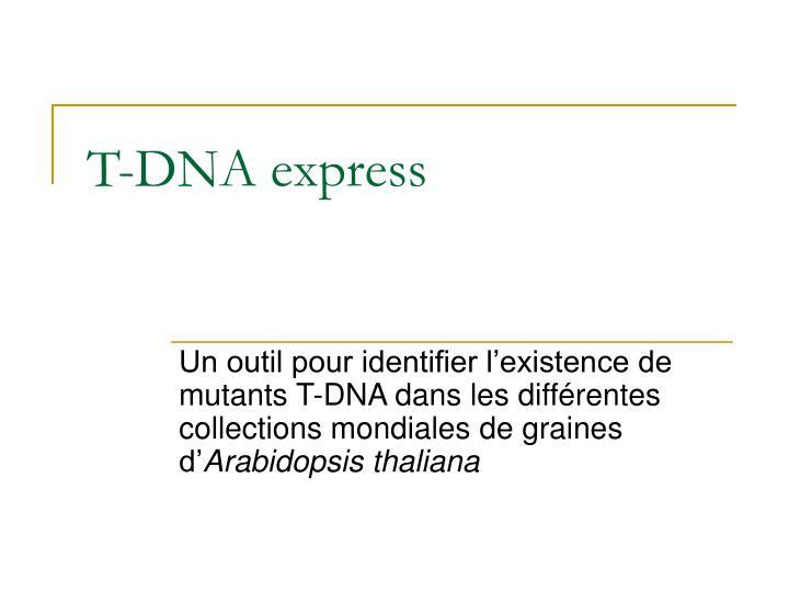 T-DNA express