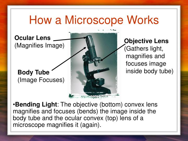 How a Microscope Works