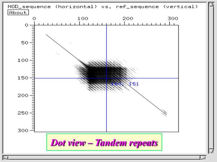 Dot view – Tandem repeats