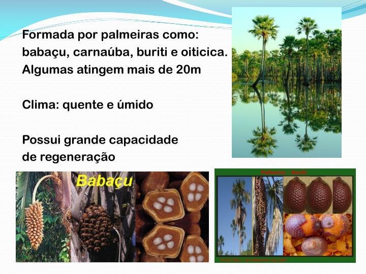 Formada por palmeiras como: