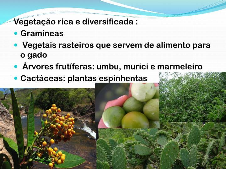 Vegetação rica e diversificada :