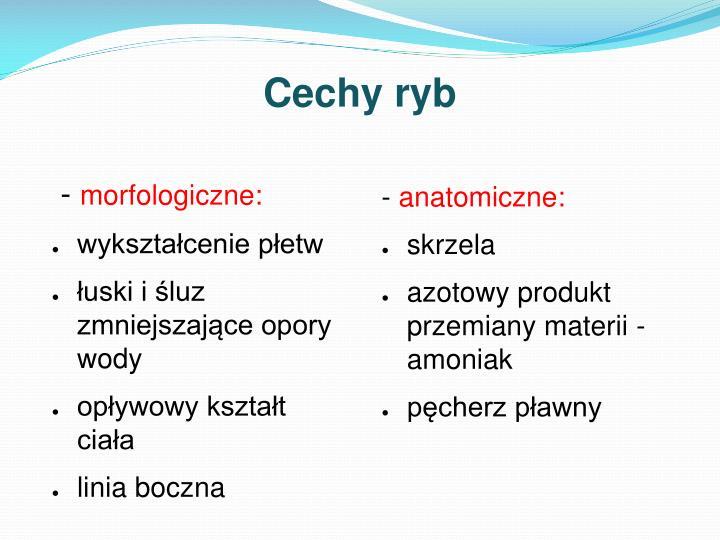 Cechy ryb