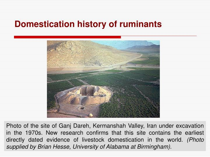 Domestication history of ruminants