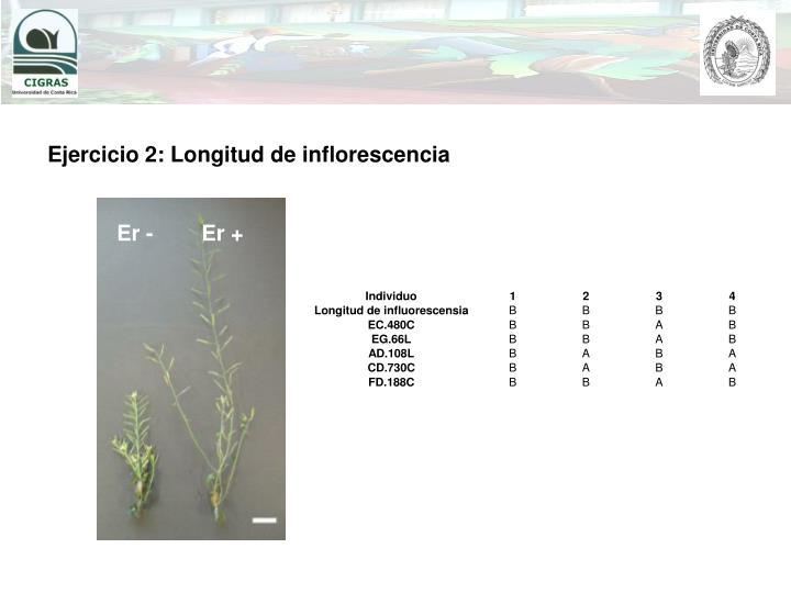Ejercicio 2: Longitud de inflorescencia